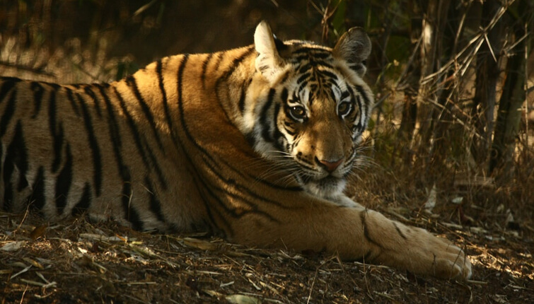 Fauna in Bandhavgarh Park