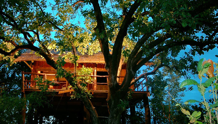 Tree House Hideaway Resort Bandhavgarh