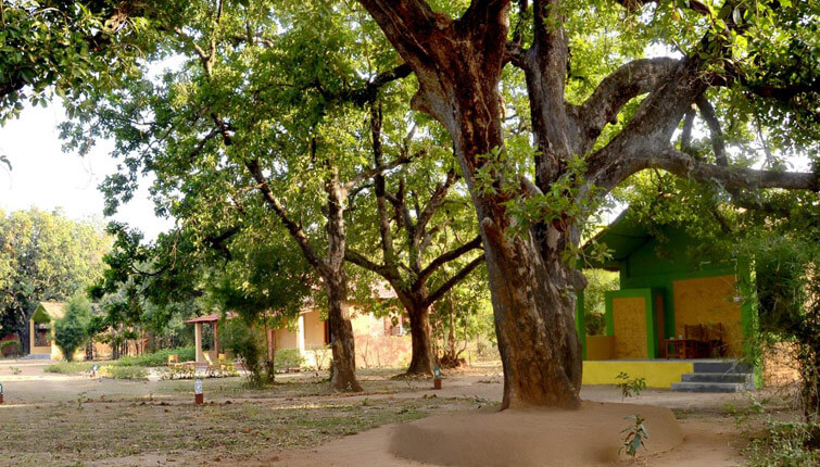 Wild Haven Resort Bandhavgarh