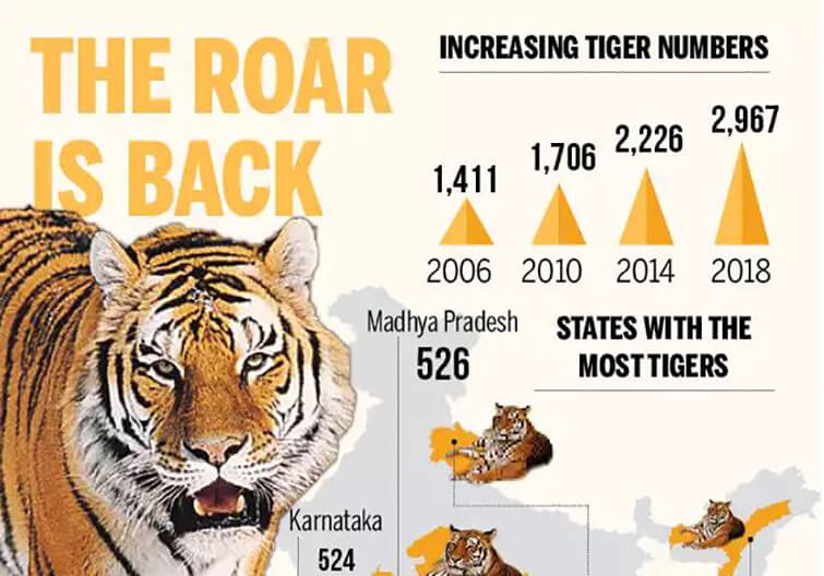 MP-tops-country-with-526-tigers-as-per-All-India-Tiger-Estimation-2018